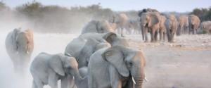 African Wildlife Foundation