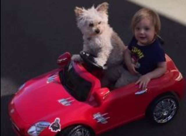 vid o un chien au volant d 39 une mini voiture avec un enfant bord. Black Bedroom Furniture Sets. Home Design Ideas