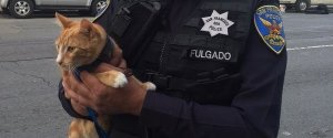 GATO POLICIA SALVA VIDA