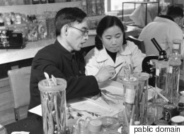 ノーベル賞受賞者トウ・ヨウヨウ氏はダンゴムシをつぶしたか