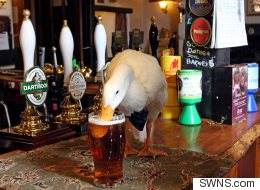 Duck Wearing Bow-Tie Walks Into Pub, Drinks Pint, Fights Dog