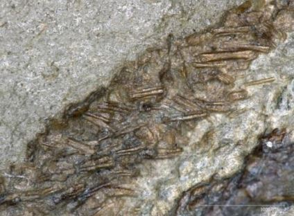 decouverte fossile