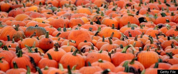 HURRICANE IRENE PUMPKIN SHORTAGE
