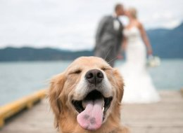 Couple Get Married, Their Dog Couldn't Be Happier For Them