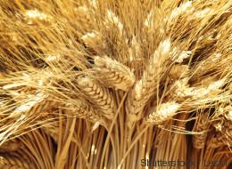 La séquence du plus grand des chromosomes du blé tendre dévoilée