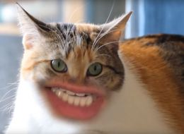 Cats With Human Mouths Are Hilarious, Terrifying