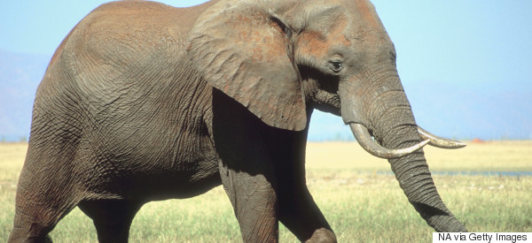 Why Burning Ivory Is Right