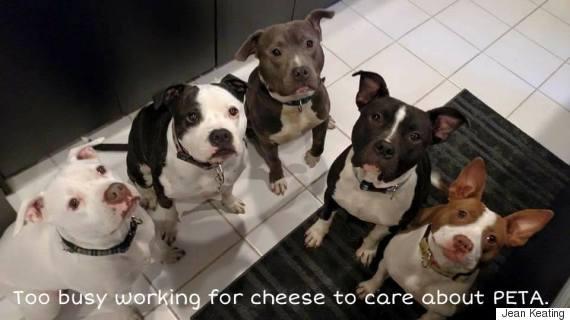 Dear PETA: Dogs Respond To PETA Joining Terrible Anti-Pit Bull Coalition | HuffPost