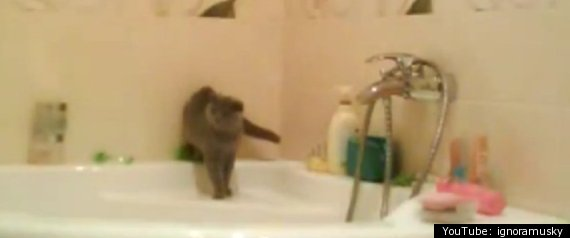 CAT FALLS IN BATHTUB