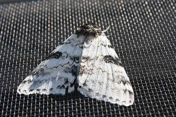How To Get Rid Of Moths In Closets Home Improvement