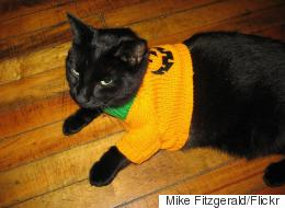 20 Cats Who Hate Their Halloween Costumes