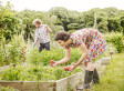 10 Edible Plants To Grow, Forage And Cook At Home