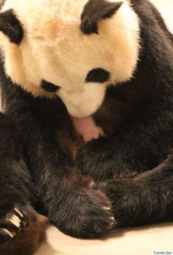 er shun twin panda