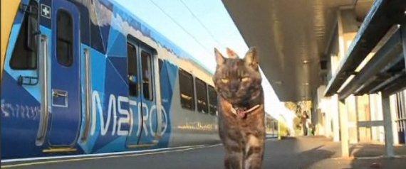 Cat Melbourne