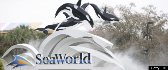 Dawn Brancheau Seaworld Death