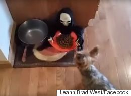 Owner Pranks Dog With Halloween Food Bowl