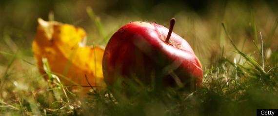 APPLE AS FORBIDDEN FRUIT