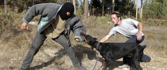 DOGS TRAINED WITH ISRAELI ARMY