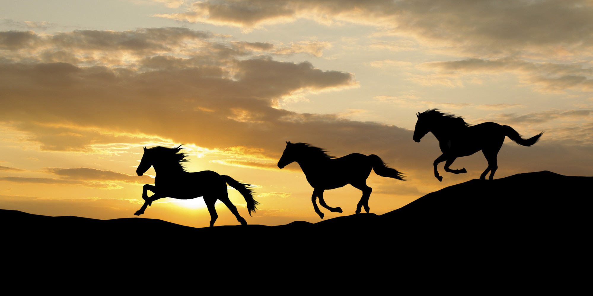 horses across sunset