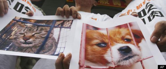 CHINA DOG EATING FESTIVAL