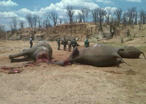 elephants cyanide