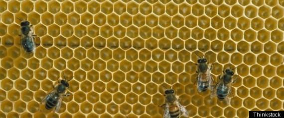 BEE HONEY IS KOSHER