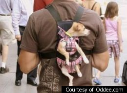 13 Hilarious Pictures Of Walking The Dog