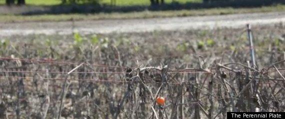 NEW YORK FARMERS HURRICANE IRENE