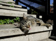 World Rabies Day 2011: Debate Over Best Way To Control Virus In Feral Cat Colonies