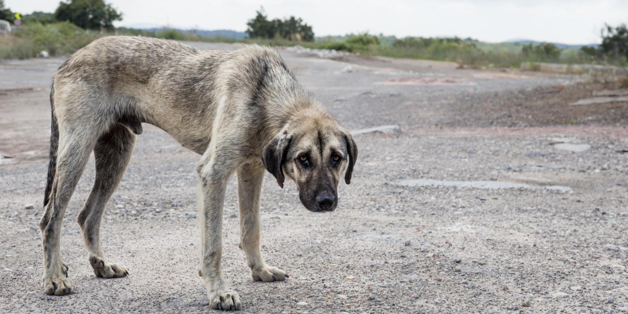 what is animal cruelty and how Animal cruelty is without question one of the sickest and most despicable crimes in the world, and also the most preventable people engage in animal abuse in every.