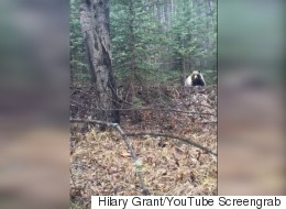 Ontario Tourists Luck Out With Bear After Doing Everything Wrong