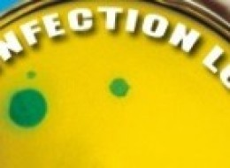 Introducing 'The Infection Loop': A New Column Connecting Humans, Animals, And The Environment