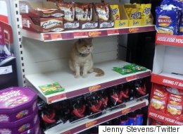 Cat Walks Into Sainsbury's, Commandeers Shelf, Refuses To Leave