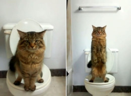 Clever Cat Uses Human Toilet, Is Inexplicably Hilarious