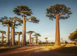 Affenbrotbaum: Darum ist fairer Handel der Superfrucht so wichtig