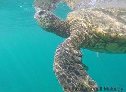 Maui autrement : 5 activités pour les aventuriers fauchés