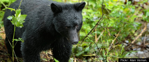 Couple Attacked By Bear Pennsylvania