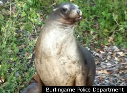 Sea Lion Rescued