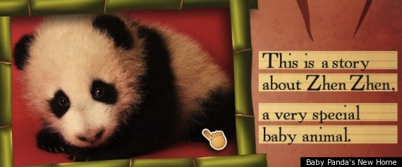 BABY PANDA IPAD APP PHOTOS VIDEO
