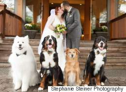 B.C. Couple's Dogs Steal The Show At Their Wedding