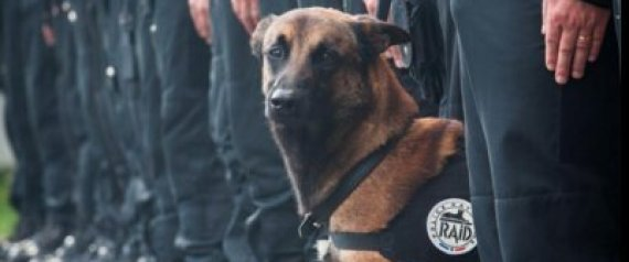 Paris Police Dog and Suicide Bombers Die in Predawn Raid of Terror Cell (photo)