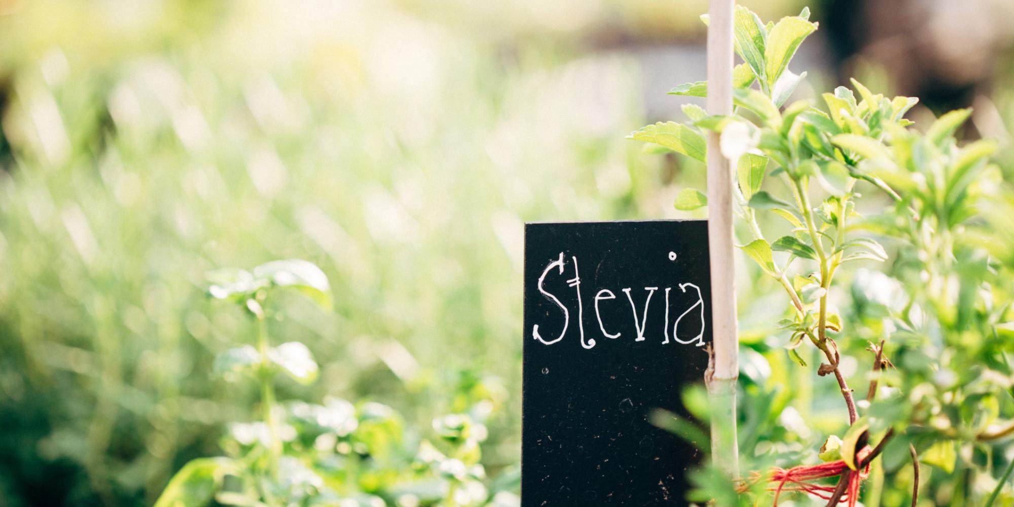 superfood stevia ist die pure s e f r gesundheitsbewusste. Black Bedroom Furniture Sets. Home Design Ideas