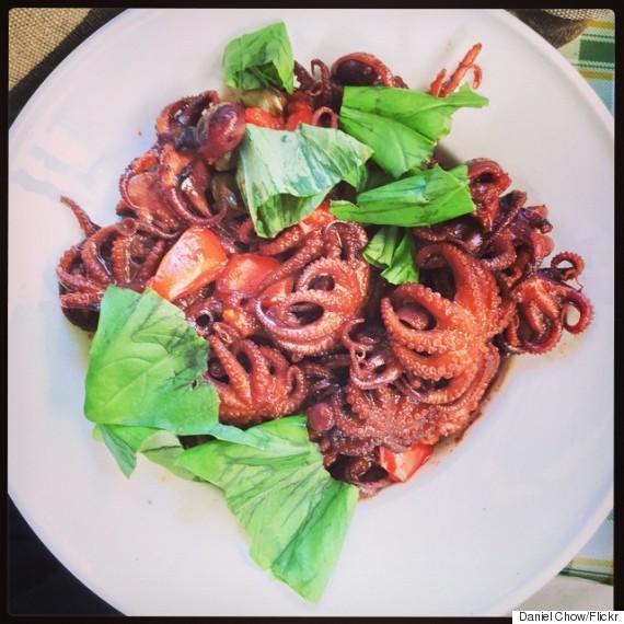 octopus italy