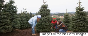 CHOPPING CHRISTMAS TREE