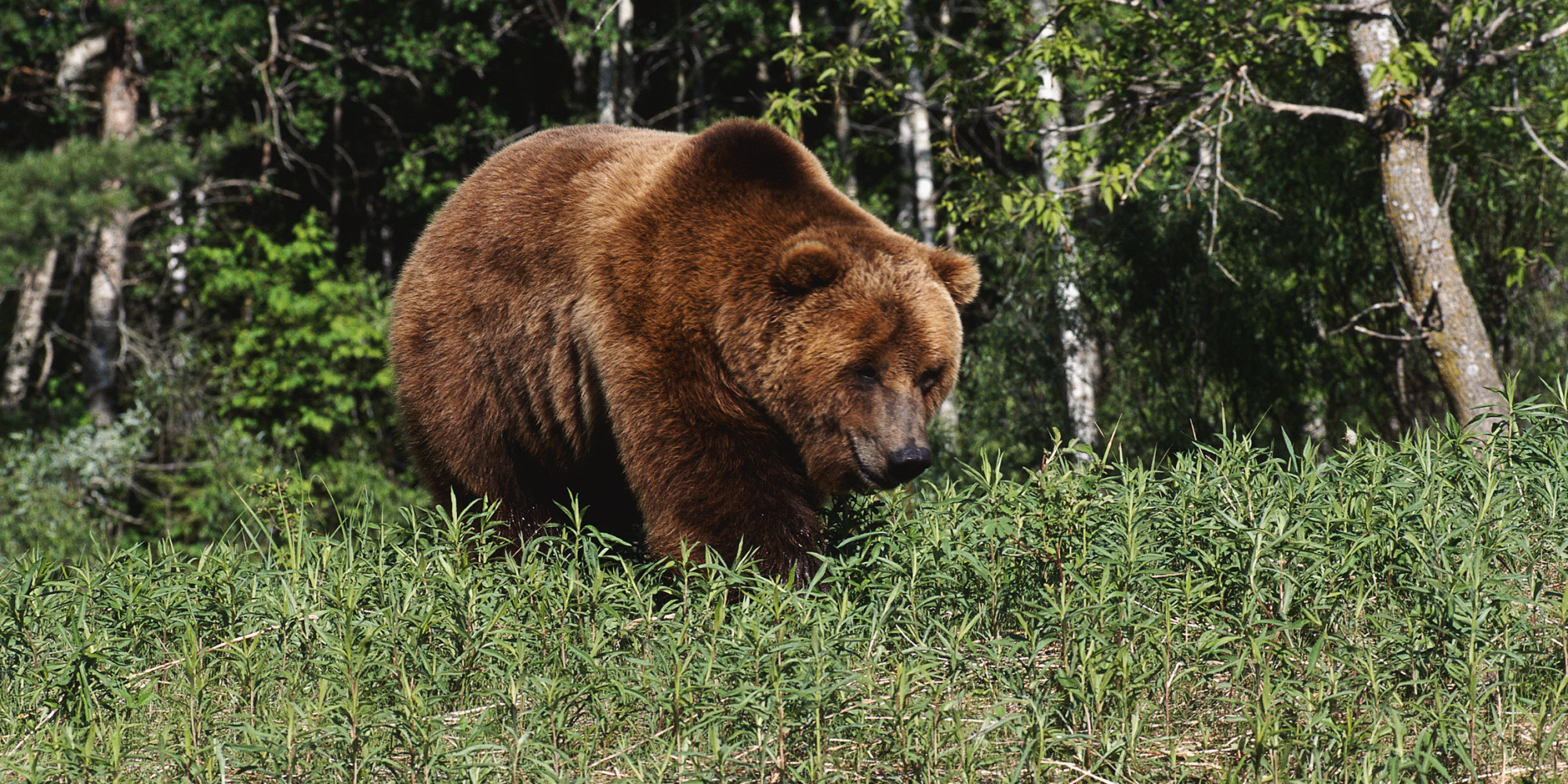 Banff Grizzly Gives Hikers A Scare