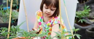 Child Marijuana