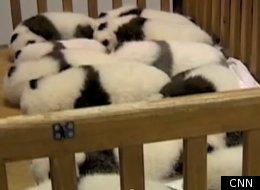 WATCH: New Snuggling Baby Panda Video