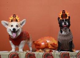 Estos perros son los más adorables invitados de Acción de Gracias