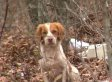 Arkansas Dog Hoarder Found Dead In Home, Eaten By Own Pets