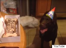 Adorable Dog Has The Most Beautiful Response To Her Family Singing 'Happy Birthday'